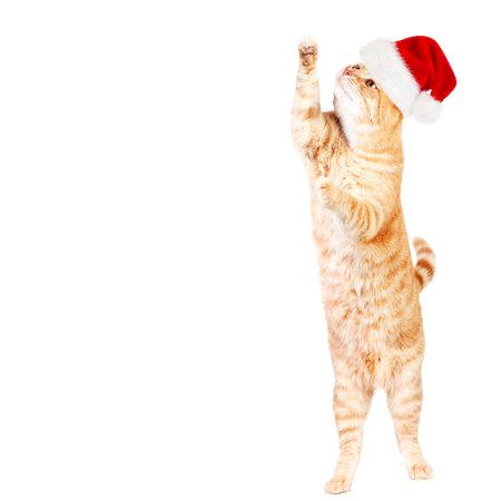Gember santa kat geïsoleerd op een witte achtergrond. Stockfoto
