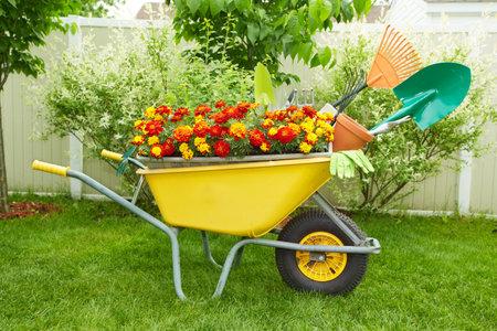 Kruiwagen met tuingereedschap in de tuin.