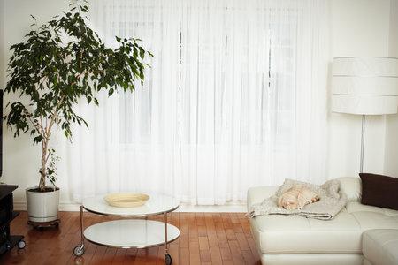 아름다운 아늑한 현대 아파트. 부동산 개념. 스톡 콘텐츠 - 45541726