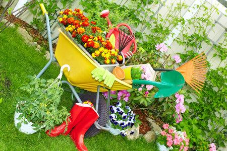 Wheelbarrow with Gardening tools in the garden.