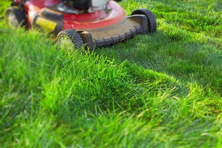 푸른 잔디 절단 잔디 깎는 기계. 정원에서 작업 할 수 있습니다.