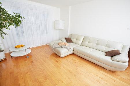 아름다운 아늑한 현대 아파트. 부동산 개념. 스톡 콘텐츠 - 45791805