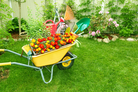 庭でのガーデニングと手押し車。 写真素材 - 46626686