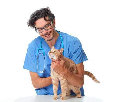 Ginger cat and a vet physician in veterinary clinic.