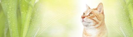 Cat Stock Photo - 79706661
