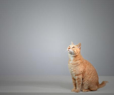 Cat Stock Photo - 87260590