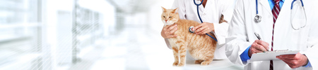 Cat and veterinarian doctor