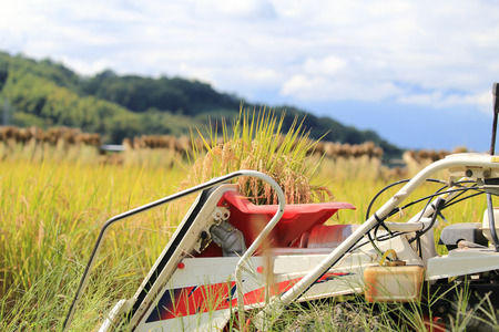 Tractor on rice reaping