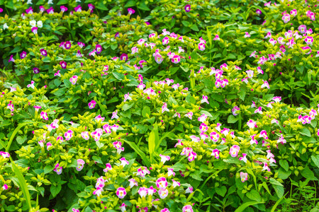 flower beds: Flower beds of colorful flowers