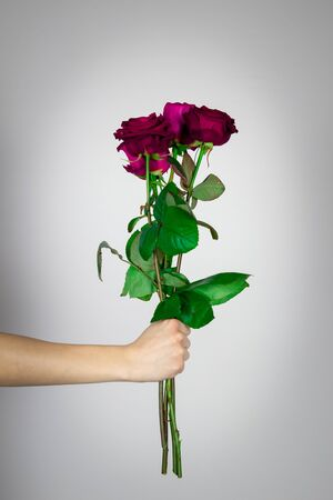 Red toned roses held in a hand isolated on white background
