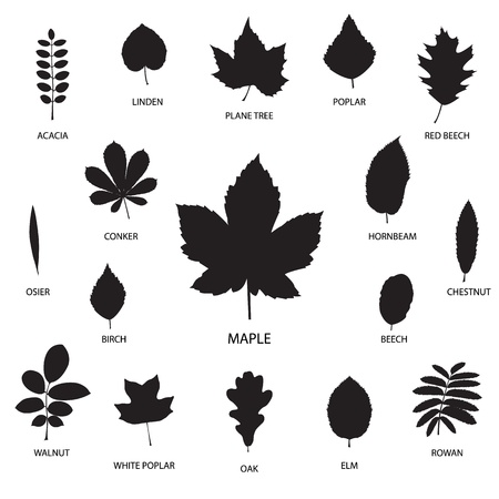 Vector collection of leaf silhouettes isolated on white background Vettoriali