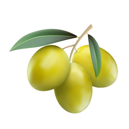 italy culture: Green olives with leaves isolaten on white background, realistic illustration