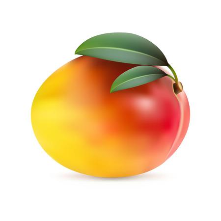 macro leaf: Mango fruit with leaves isolated on white background, realistic illustration