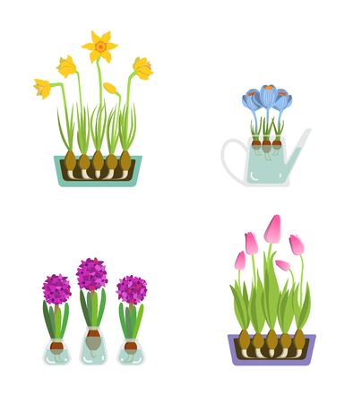 Early spring garden flowers for Valentines day isolated on white vector. Illustration of flowers in pots, vases and watering can. Ilustracja