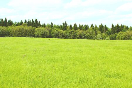 Green field, forest on the horizon and clouds. Green nature landscape background Imagens