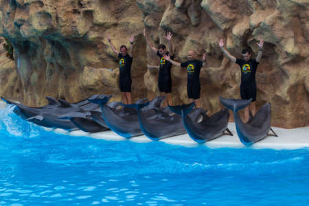 Group of dolphins jumps out of the pool in Loro Park Tenerif