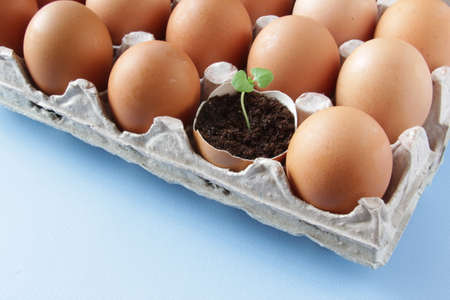 Young plant grow in egg shell. Easter decoration. Green plant in egg-shell on the blue background.