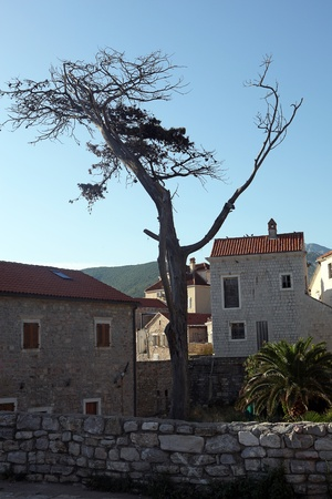Dry dead tree in a mountain village photo