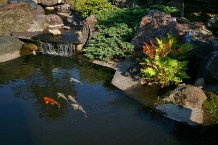 koi: Japanese garden with a small waterfall and a pond with koi. Stock Photo