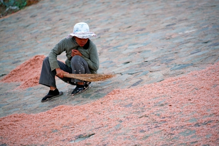 sweeps: Vietnamese woman sweeps dried krill with a broom.