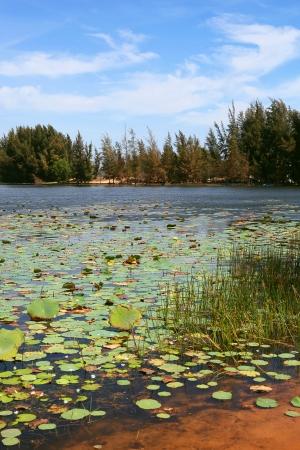 paysage: The Lotus lake in the desert, Vietnam  Stock Photo
