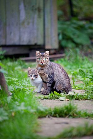 A stray tubby cat with her kitten outdoors