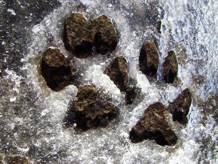 huellas de perro: huellas de perro en el hielo Foto de archivo