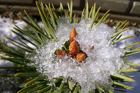 melting ice: flores en la fusi�n del hielo