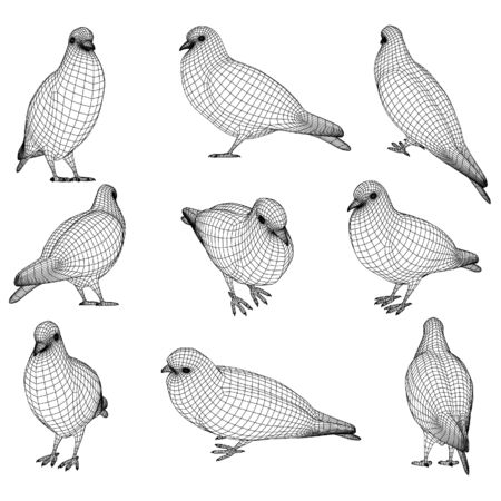 Pigeon polygonal lines illustration. Abstract vector bird on the white background Çizim