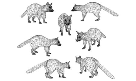 Raccoon lines illustration. Abstract vector raccoon on the white background