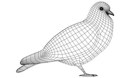 Pigeon polygonal lines illustration. Abstract vector bird on the white background