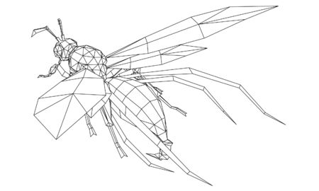 Vector illustration of a wasp. Abstract linear insect.