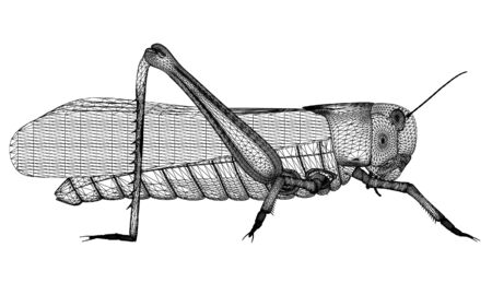 Vector illustration of a locust. Abstract linear insect.