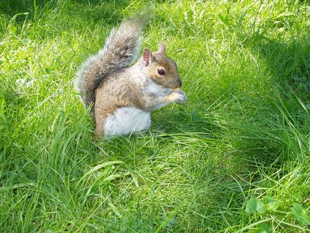 Squirrel    20032 photo