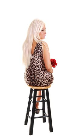 Young lovely girl in a short brown dress with a red rose in her hand, sitting on  an bar chair with the back to the camera in the studio for white background. photo
