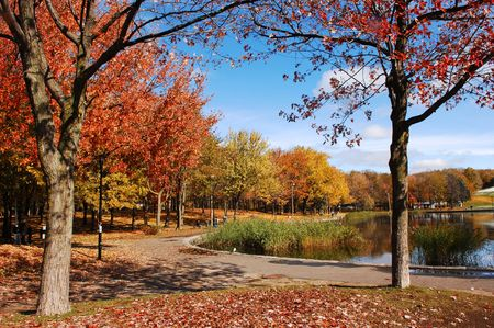 fall scenery: Fall in the park with very colorful trees, blue sky and a lake in Montreal at Mount Royal.