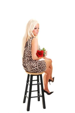 Young, lovely girl in a short panther dress with long blond hair, sitting on a  bar chair with a red rose, looking in the camera, on white background photo