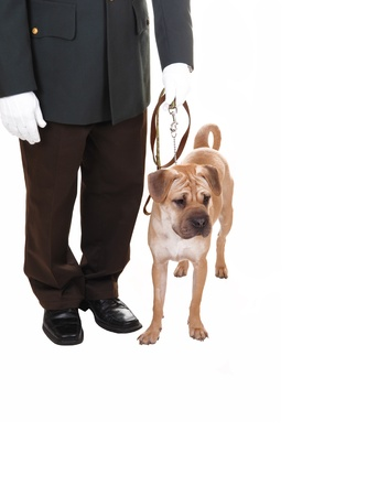 A watch man with his dog standing in the studio for white background,a sharpei dog on the leash, the man with white cloves  photo