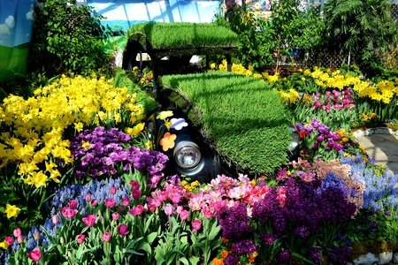 A very old VW beetle sitting in a beautiful flower show in a greenhouse inHamilton Ontario, Canada, in very early spring  photo