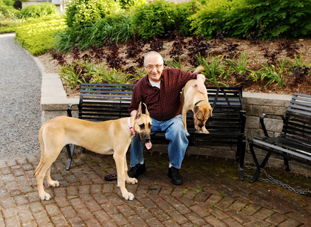A senior citizen sitting on a bench with his two dog photo