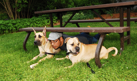 A man playing with his two dogs in the park, lying under a picnic table  photo