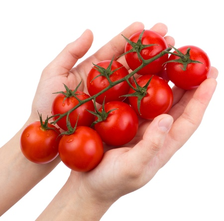 Tomatoes cherry on a green branch in female hands isolated
