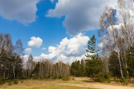 Forest crossroad expensive about a glade in the spring sunny day under the dark blue sky with big white clouds Stock Photo