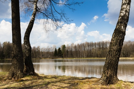 The coast of the forest lake between birches in the spring sunny day under the dark blue sky with big white clouds