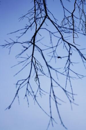 classifier: branch