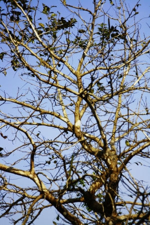 classifier: tree and stick