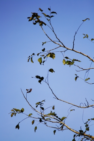 classifier: branch and blue sky Stock Photo