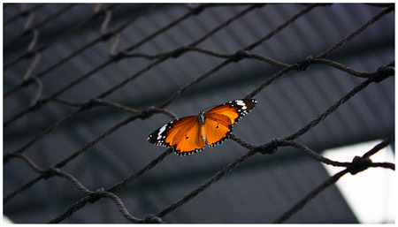 Butterfly on a mesh photo