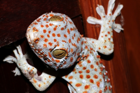 Colourful gecko photo