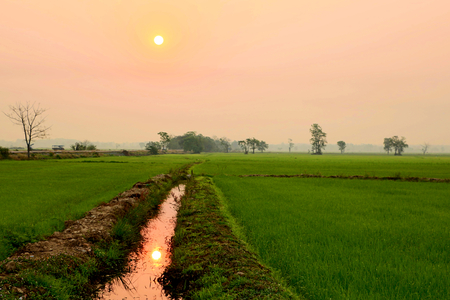 Dawn at a paddy field photo